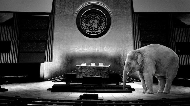 UNGASS 2021 ignores the grand corruption elephant ...